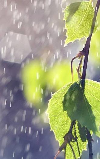 唯美下雨天意境手机壁纸