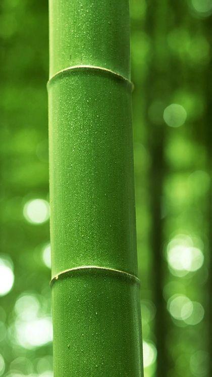 护眼绿色手机壁纸