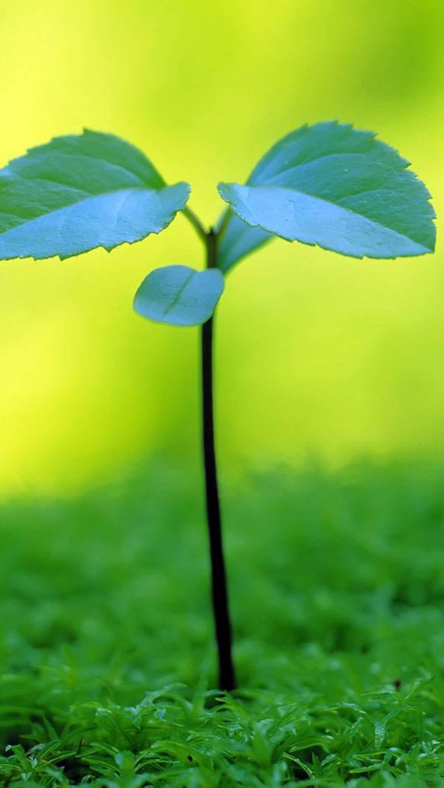植物系列春意手机壁纸