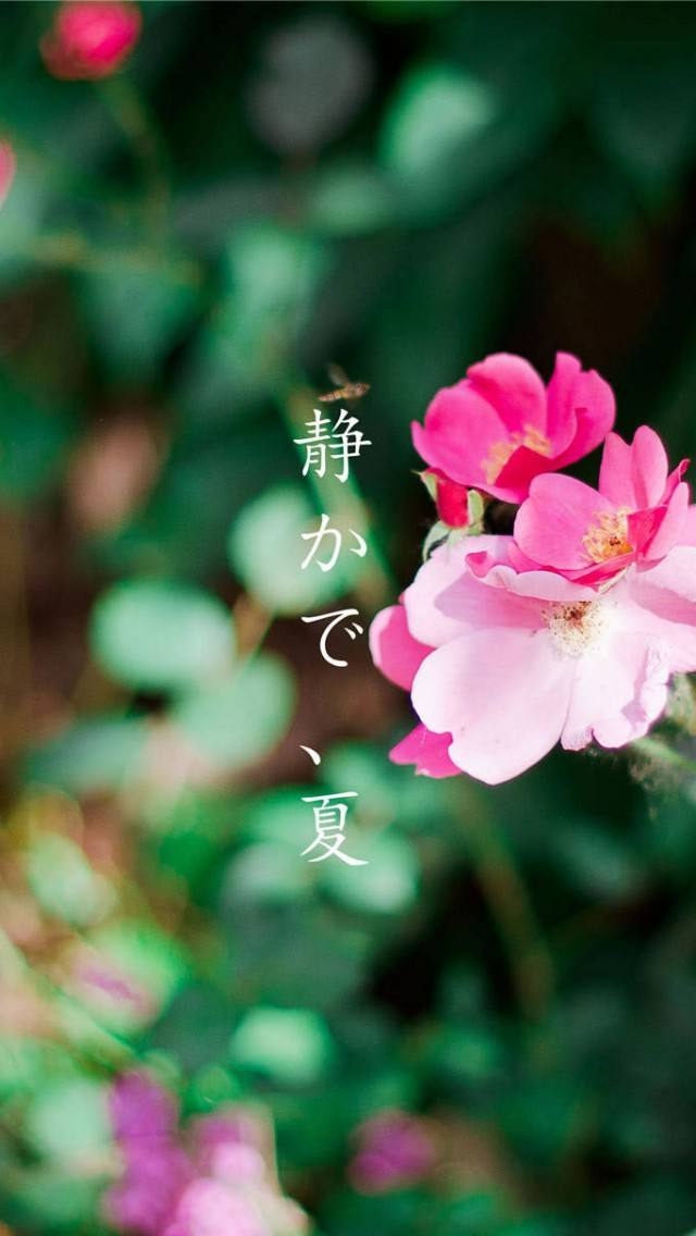 小清新花卉手机壁纸