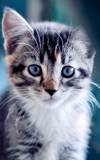 可爱的猫咪手机壁纸