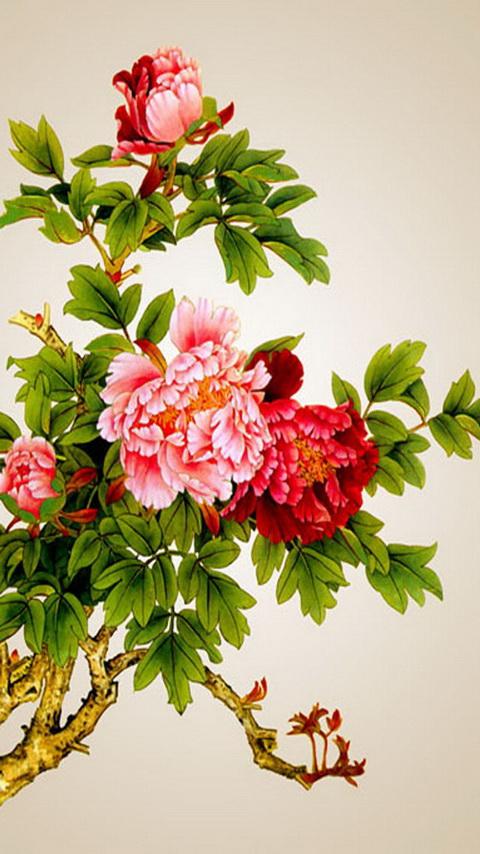 手机壁纸牡丹花图片