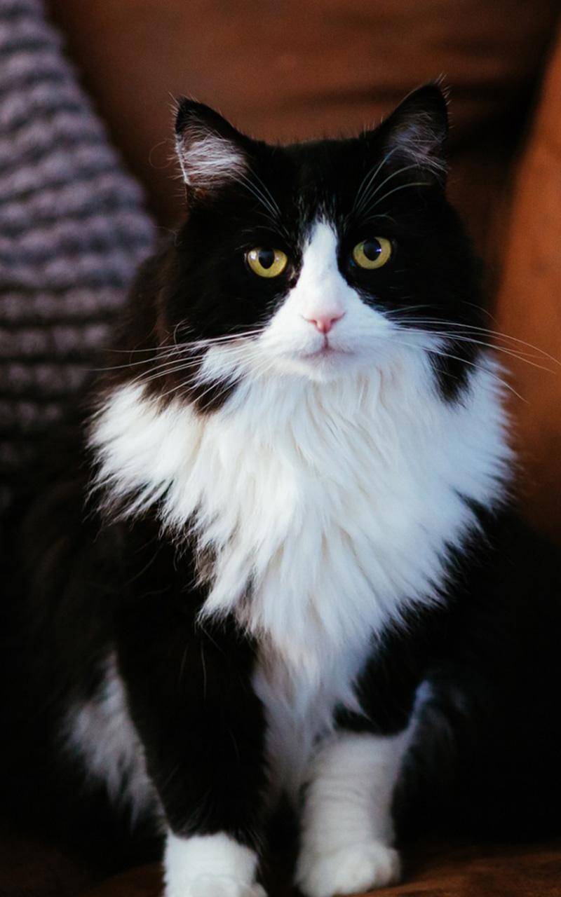 可爱猫咪手机壁纸