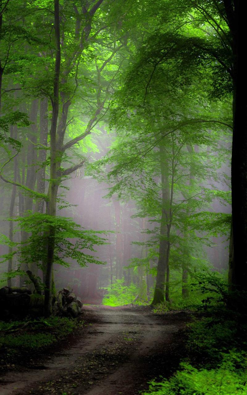幽静唯美林间小路手机壁纸