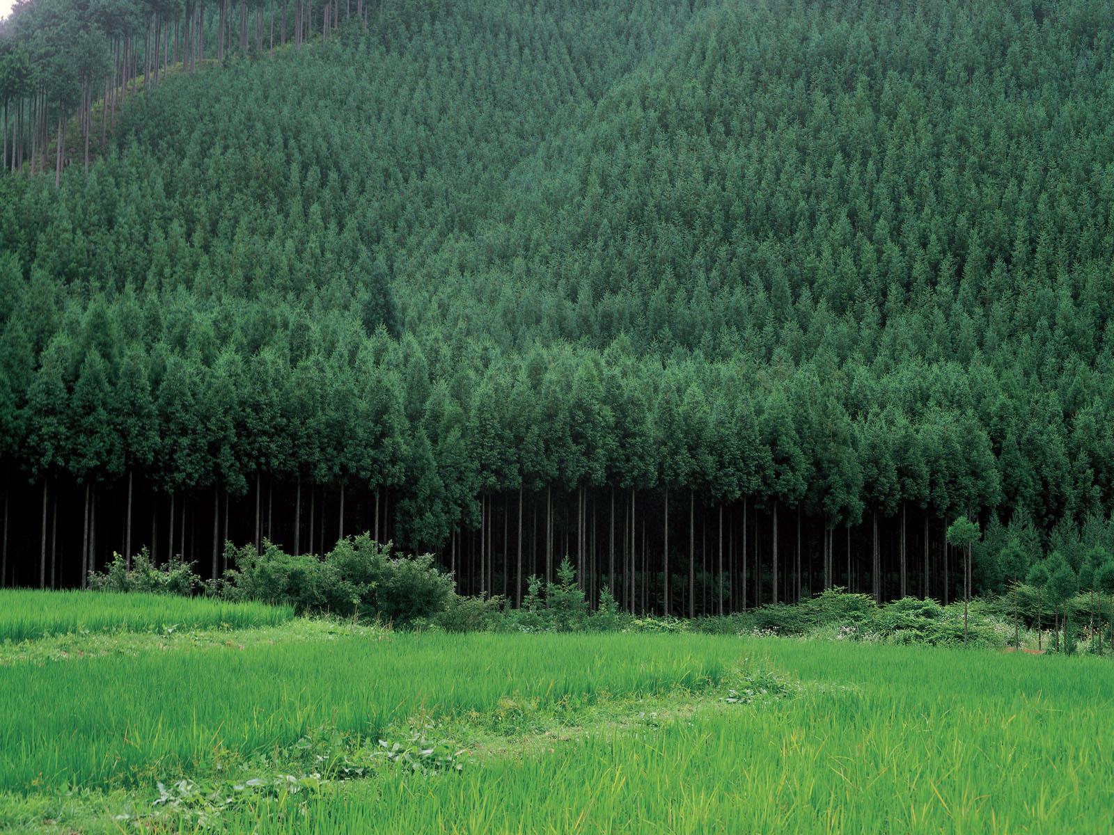 美丽韩国户外风景手机壁纸