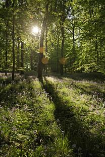森林风光手机壁纸