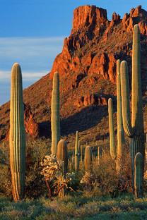 美国亚利桑那州风光手机壁纸