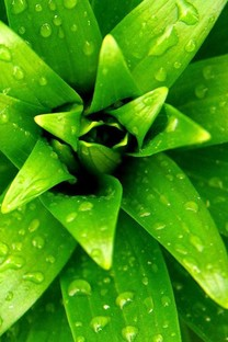 绿色植物手机壁纸
