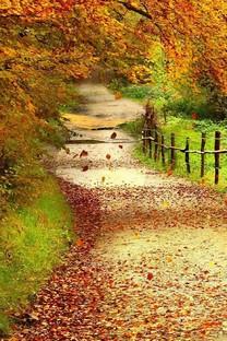 秋天落叶手机壁纸
