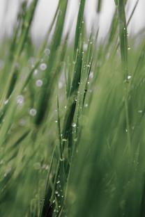 夏末秋初自然风光摄影手机壁纸