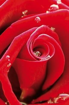多彩的玫瑰高清壁纸桌面