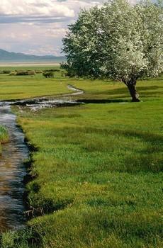美国内华达州风景手机壁纸