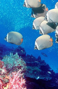 热带海底世界手机壁纸