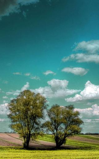高清风景植物手机壁纸图片