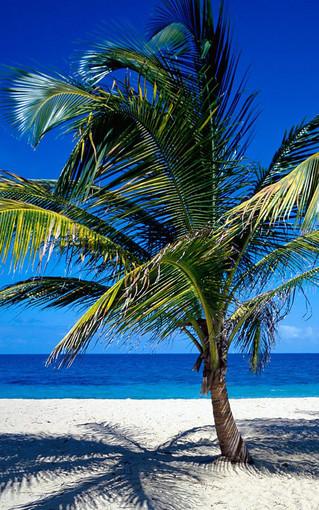 加勒比海风景手机壁纸 第6页-zol手机壁纸