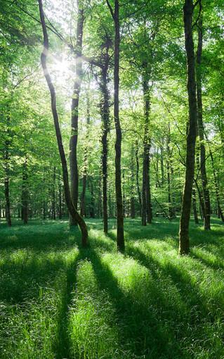 壁纸 风景 森林 桌面 319_510 竖版 竖屏 手机