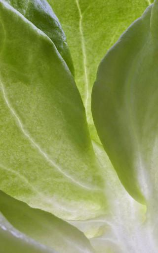 简约植物大图壁纸图片 第4页-zol手机壁纸