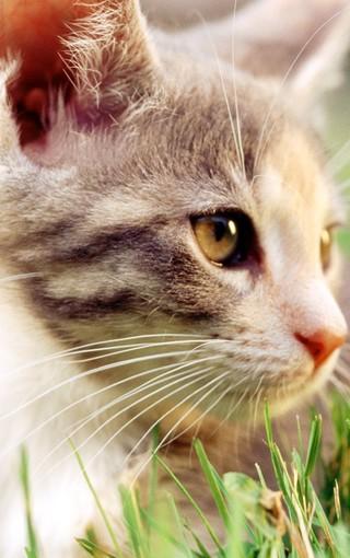 可爱猫咪大图壁纸桌面