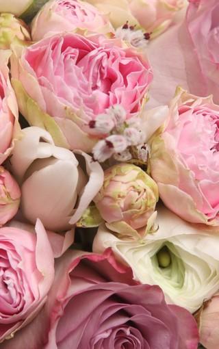 彩色玫瑰手机壁纸 第3页-zol手机壁纸