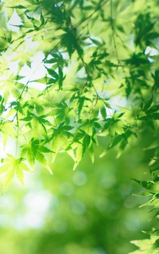 绿色护眼手机壁纸下载