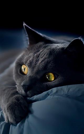 黑色猫咪可爱高清手机壁纸