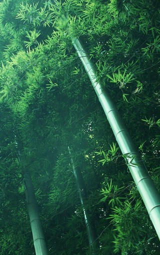 竹林唯美风景手机壁纸