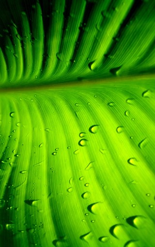 护眼绿色手机壁纸 第3页-zol手机壁纸
