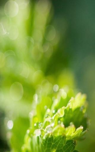 綠色護眼iphone 6 plus壁紙-zol手機壁紙