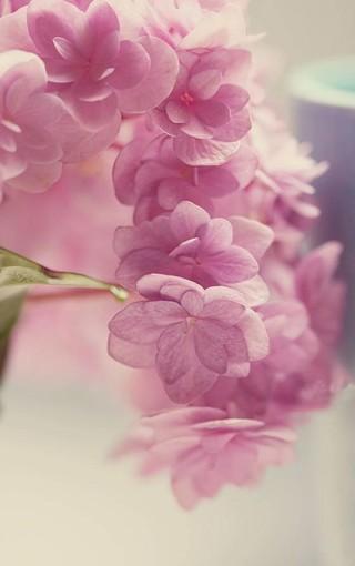 植物壁纸 花卉壁纸 清新花卉手机壁纸   (23/50)