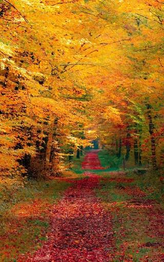 秋天落叶手机壁纸图片