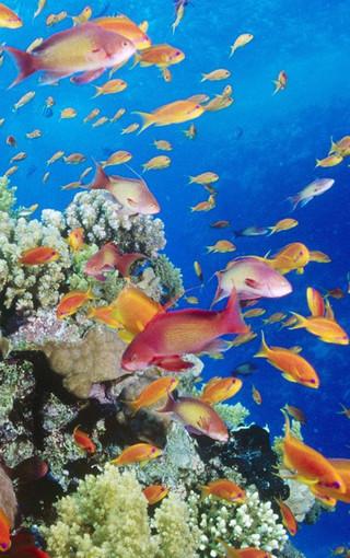 熱帶海底世界手機壁紙