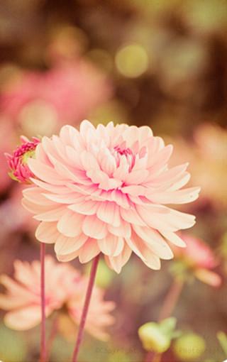唯美风景花朵壁纸