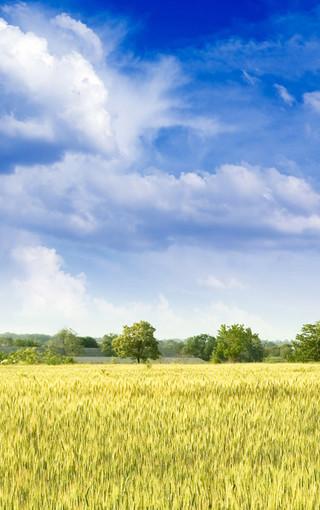 大自然清新美丽景色手机壁纸