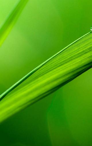 大自然的绿色唯美手机壁纸