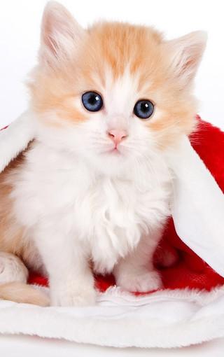 可爱猫咪高清手机壁纸
