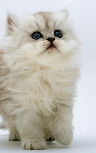 可爱猫咪手机壁纸图集