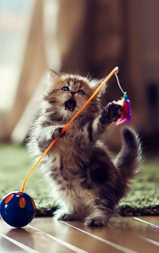可爱的小动物手机壁纸