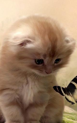 可爱的萌猫手机壁纸