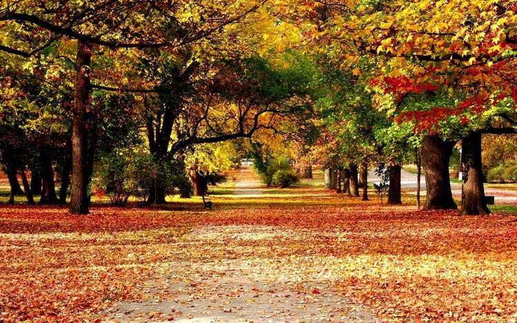 秋天林间小路风景手机壁纸