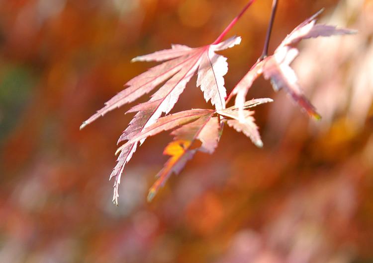 风景壁纸 自然风景壁纸 枫叶主题高清手机壁纸   (12/34)